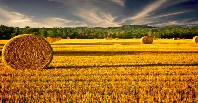 hayfield